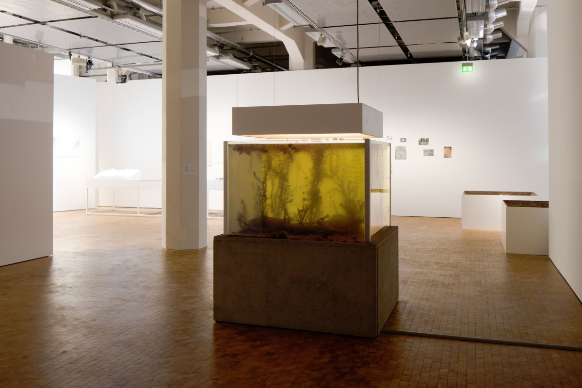Pierre Huyghe. Nymphéas Transplant (14–18). 2014. Mixed-media installation, live pond ecosystem, light box, switchable glass, concrete, 189 × 143.5 × 128.7 cm, Courtesy of the artist and Hauser & Wirth, London. Supported by Hauser & Wirth. © VG Bild-Kunst Bonn, 2016.