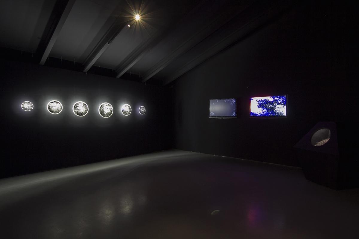 20a-kuai-shen-miesto-gamta-nacionaline-dailes-galerija-2017