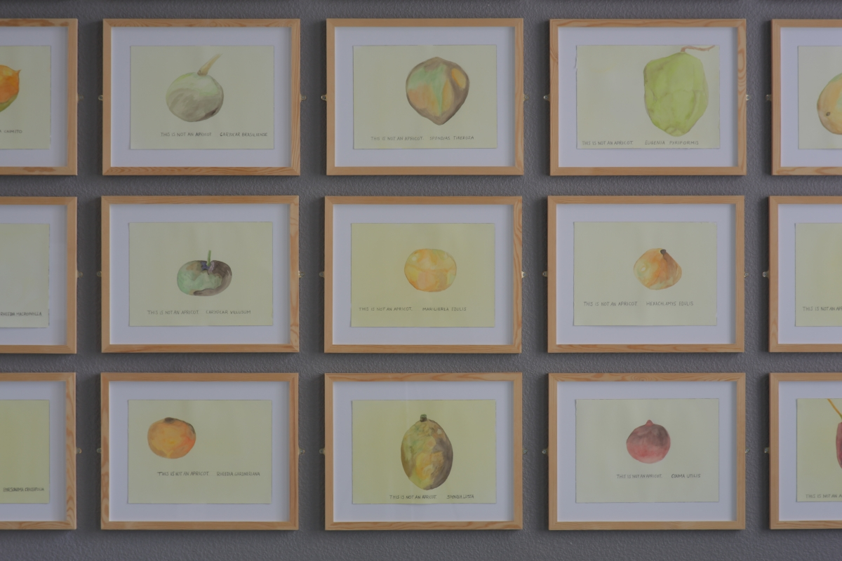Maria Thereza Alves. This is Not an Apricot. Watercolor paintings on paper, 2009